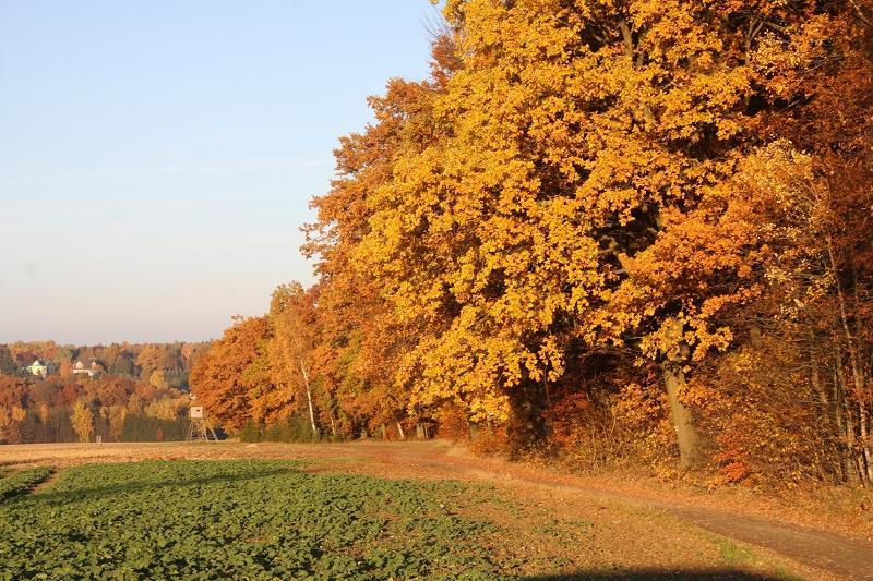 Landschaftsschutzgebiet Greiz – Werdauer Wald