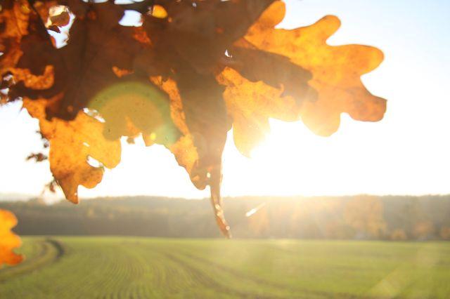Herbstwanderung Kahmer